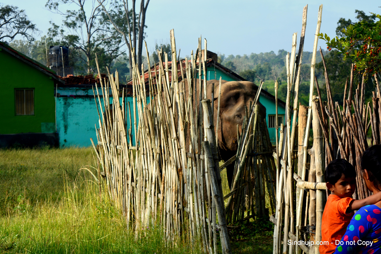 elephant spotting bandipur