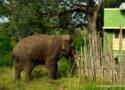 spotting wild animals in bandipur